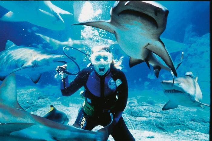 Shark dive, UnderWater World